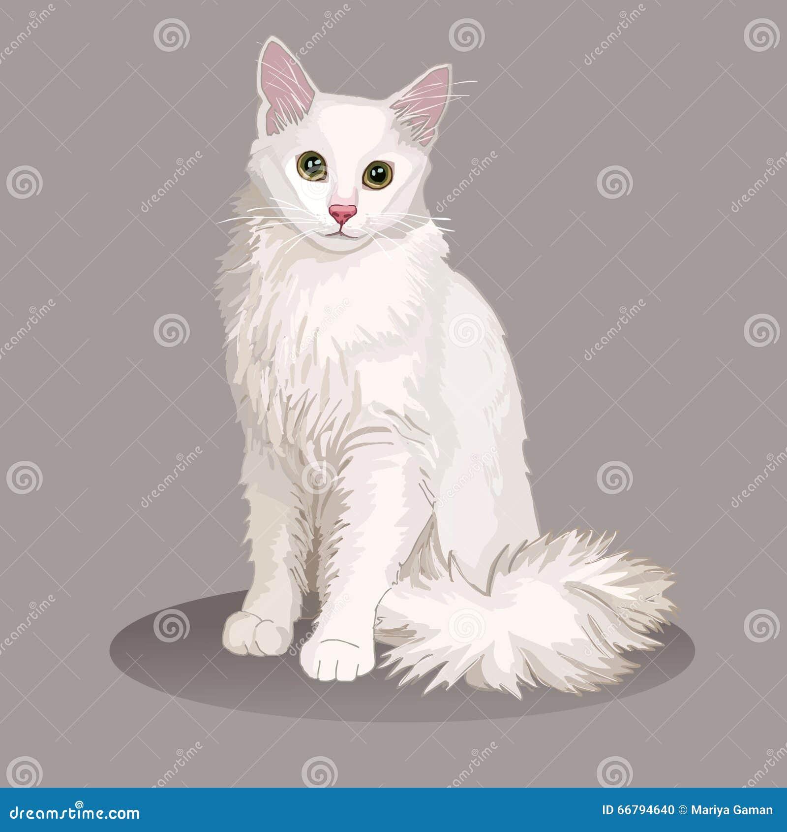 Gatto di angora Razza del gatto Animale domestico favorito Gattino lanuginoso adorabile con gli occhi verdi Illustrazione realist