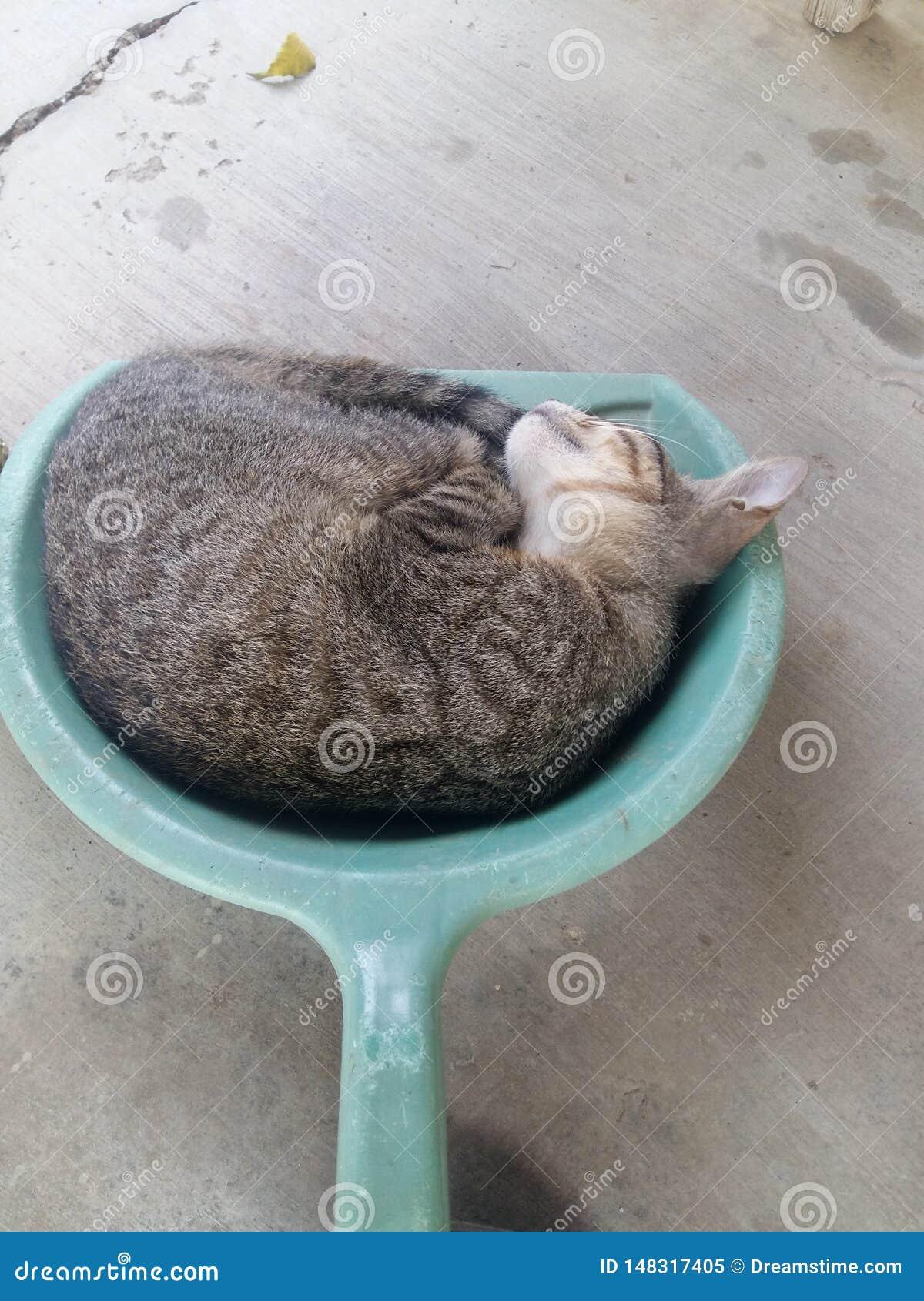 Gatto di Kitty in una paletta per la spazzatura