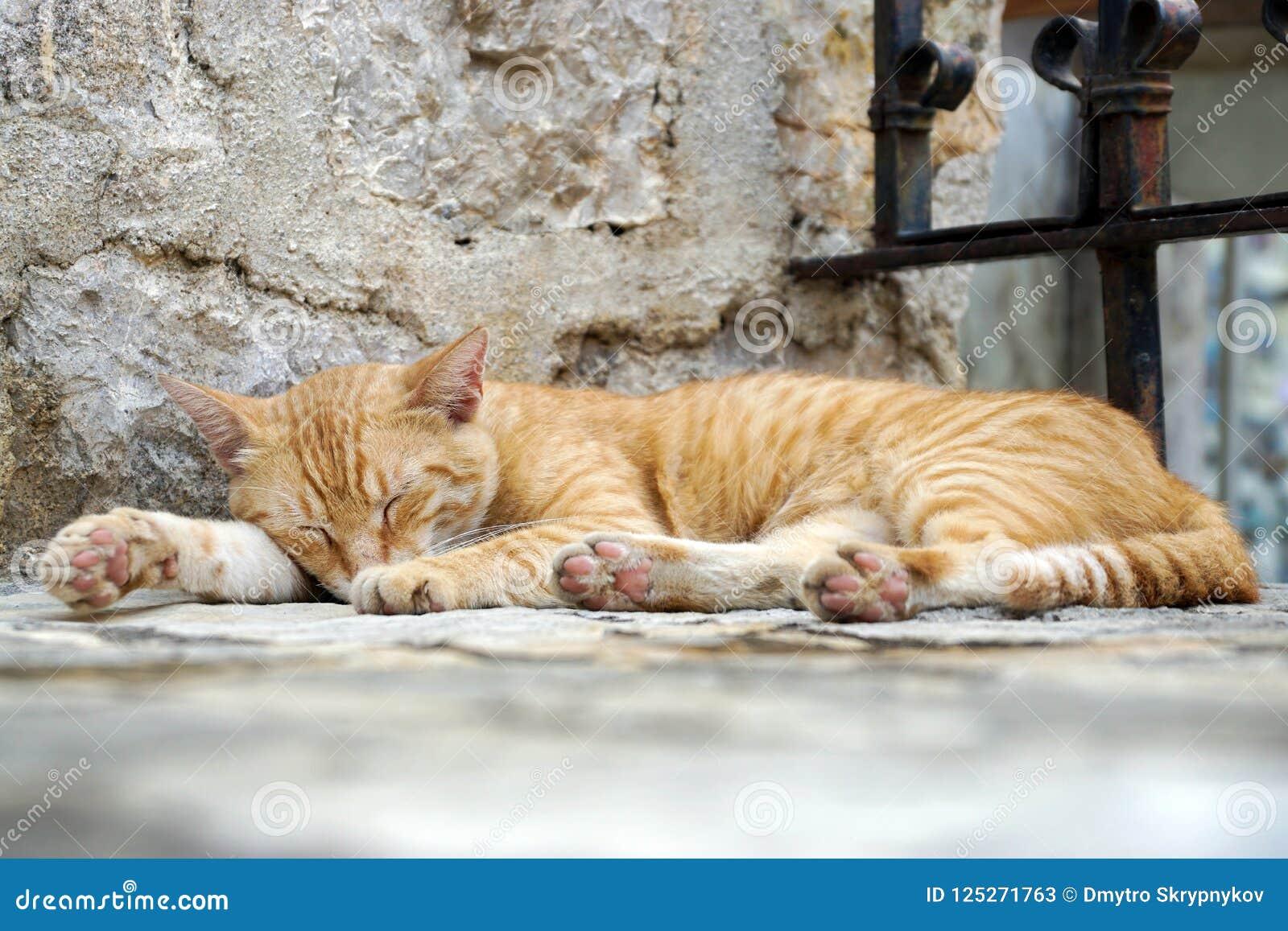 Gatto di sonno che si trova su un punto in un tempio