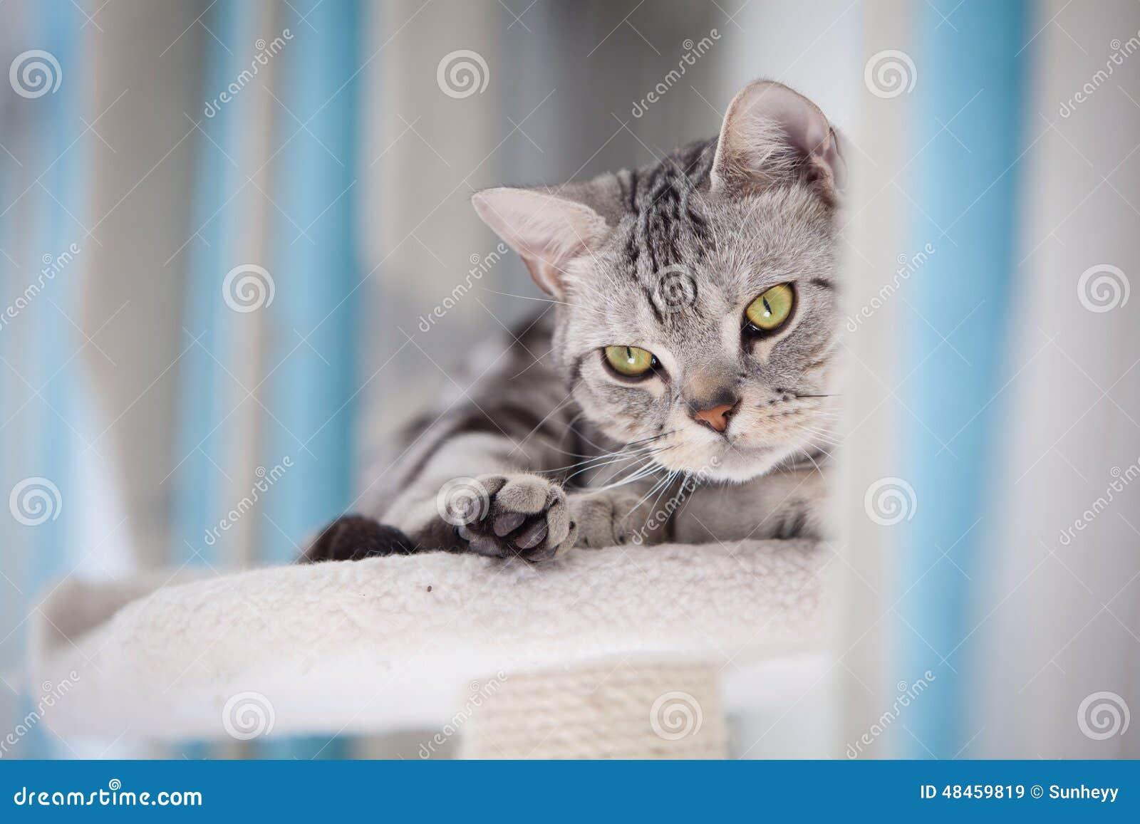Gatto di Tabby che esamina la macchina fotografica
