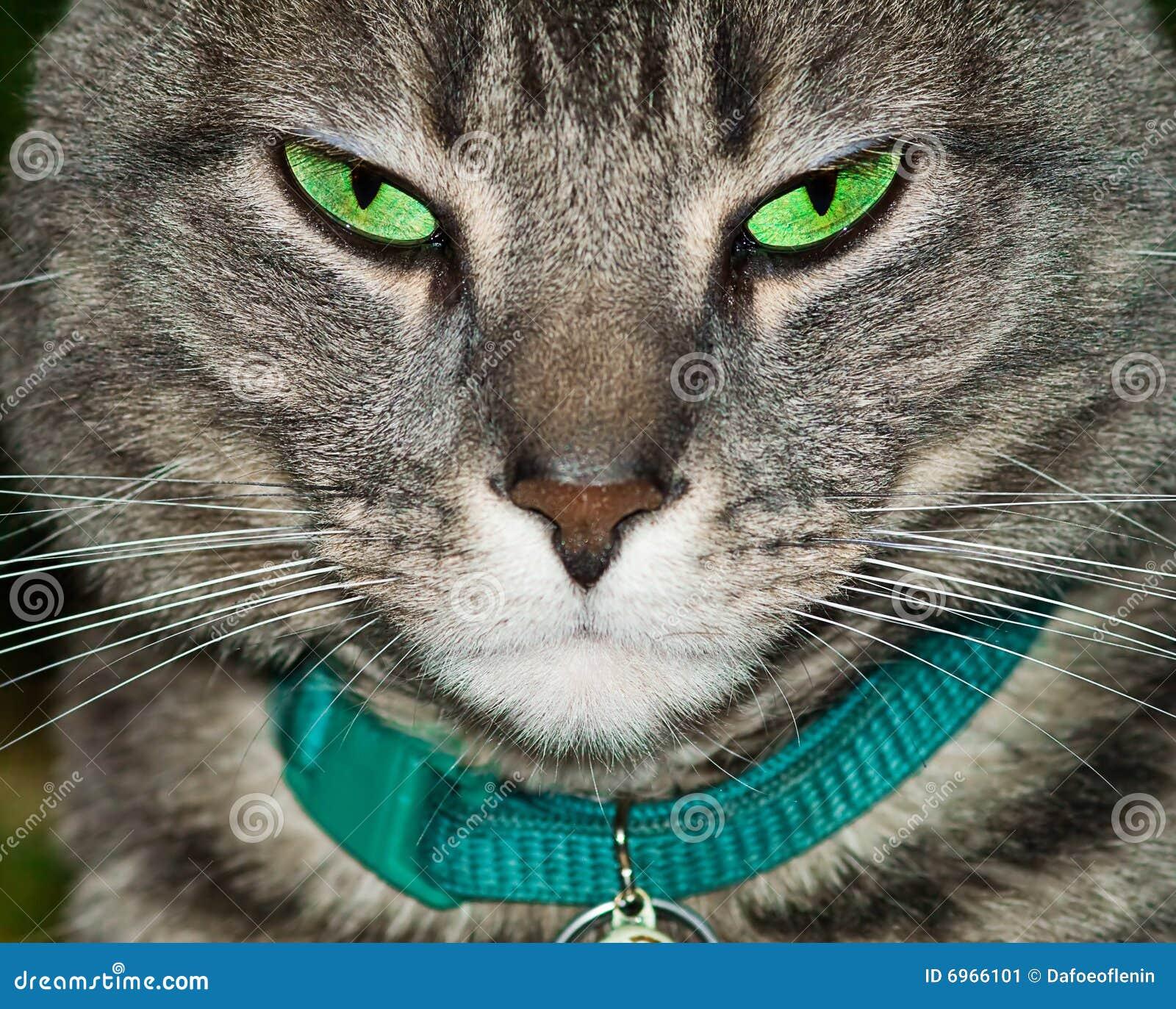 Gatto di tabby faticoso
