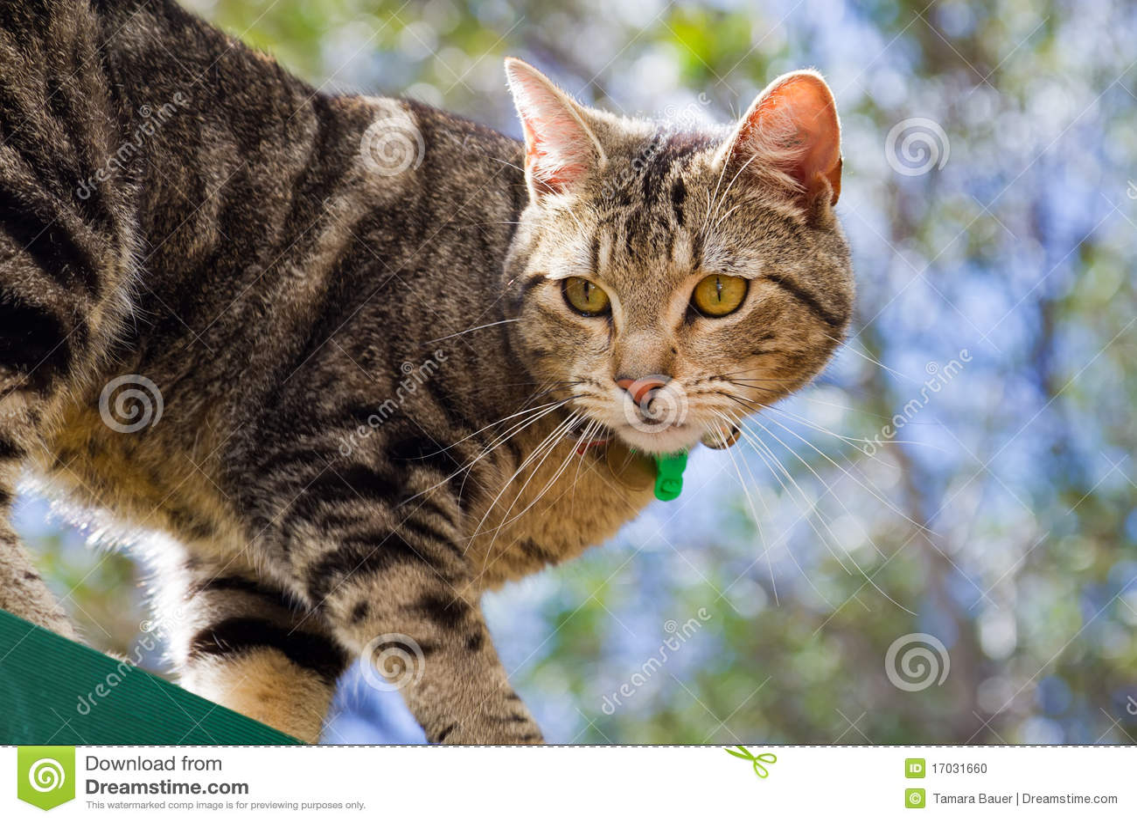 Gatto di Tabby in giardino
