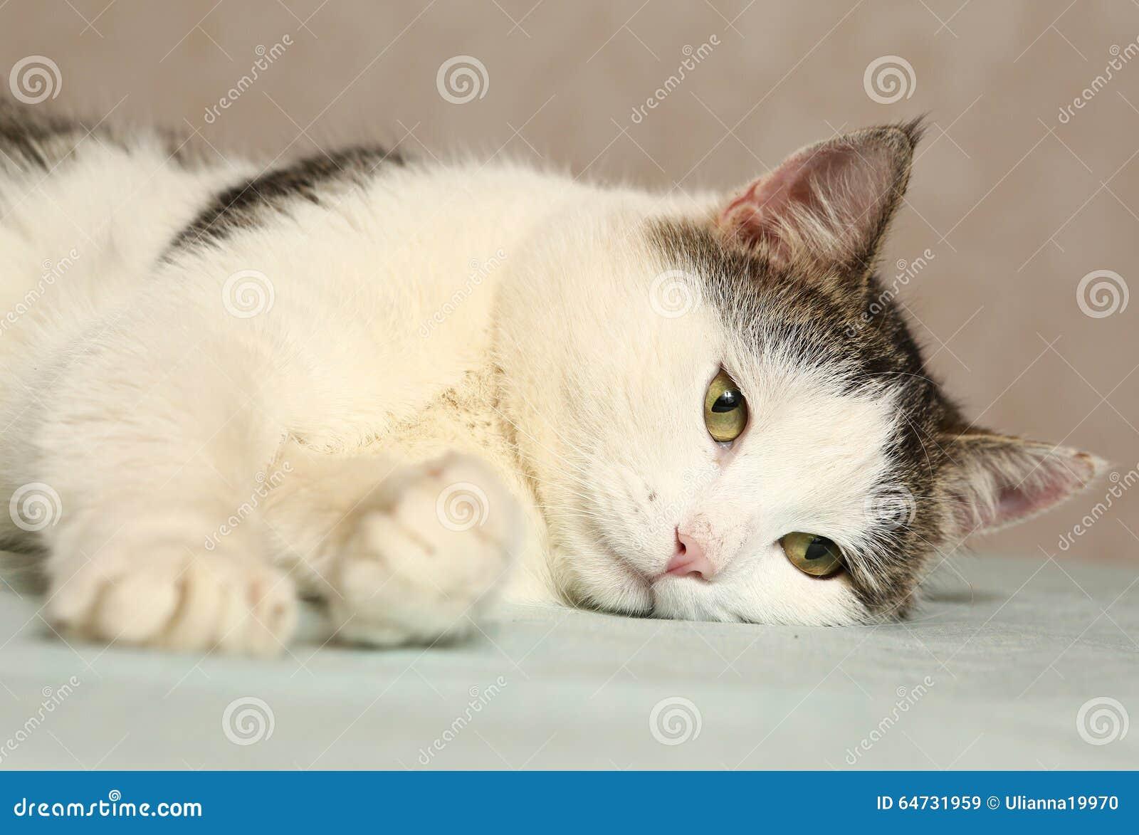 Gatto di Tom che gioca con il nastro rosso