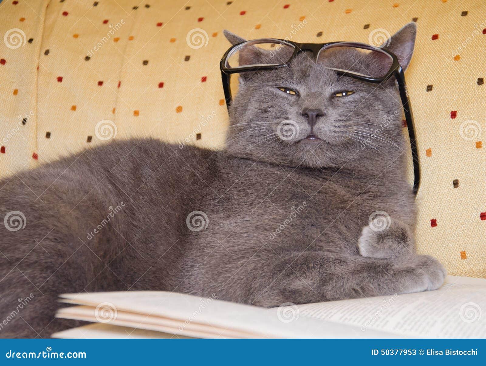 Gatto divertente con gli occhiali