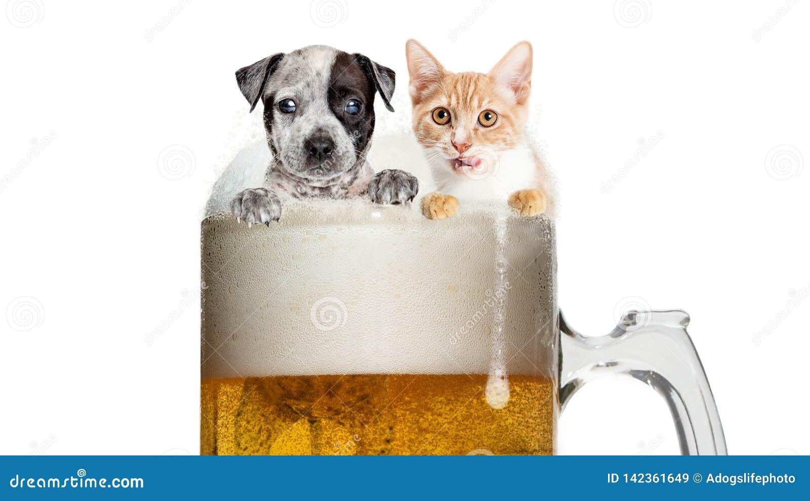 Gatto E Cane Divertenti In Frosty Beer Mug Immagine Stock Immagine