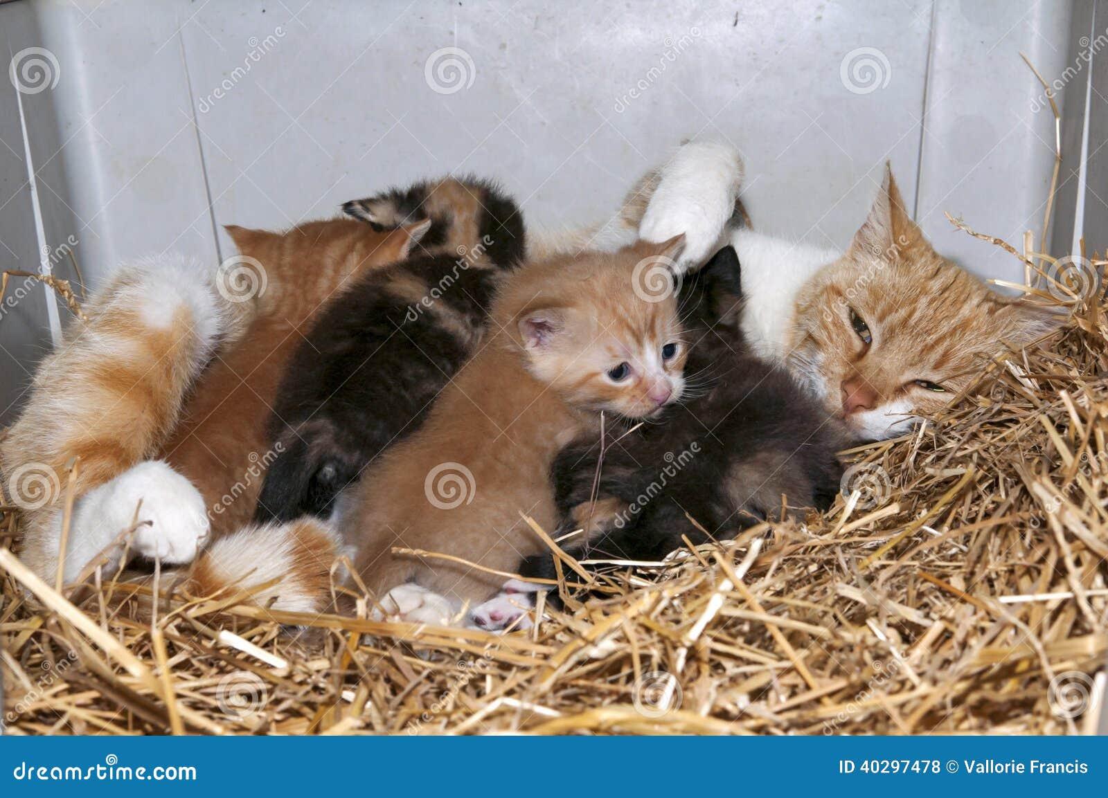 Gatto e gattini di mamma