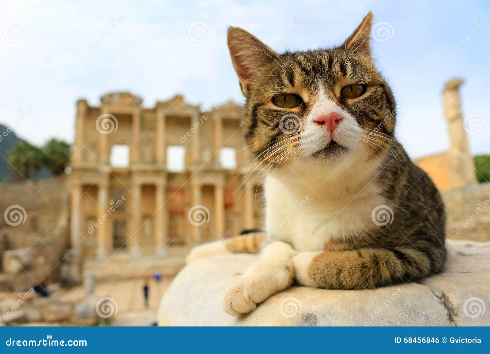 Gatto A Ephesus Turchia Fotografia Stock Immagine Di Felino 68456846