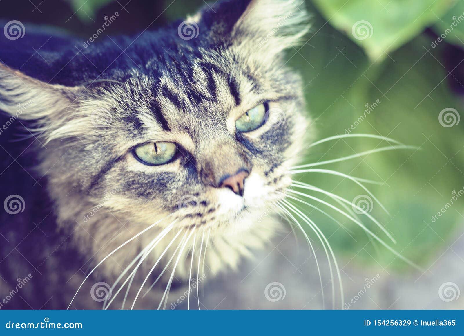 Gatto grigio con gli occhi verdi nella fine del giardino su