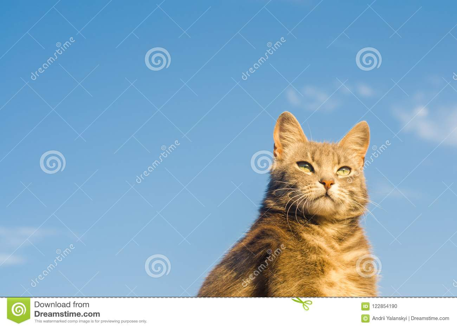 un gatto nel blu lyrics