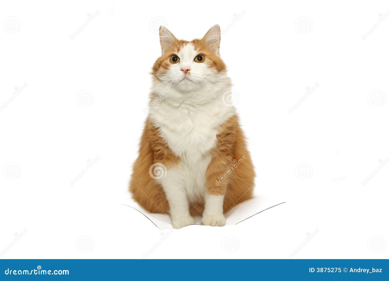 Gatto isolato