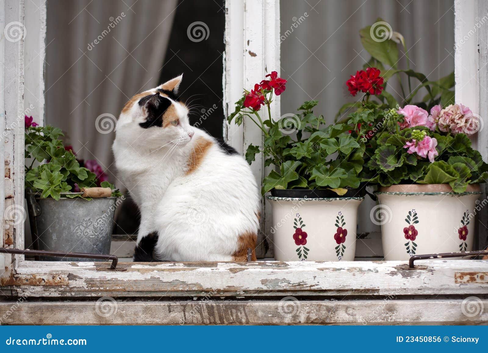 Gatto Macchiato Su Una Finestra Immagine Stock Libera Da