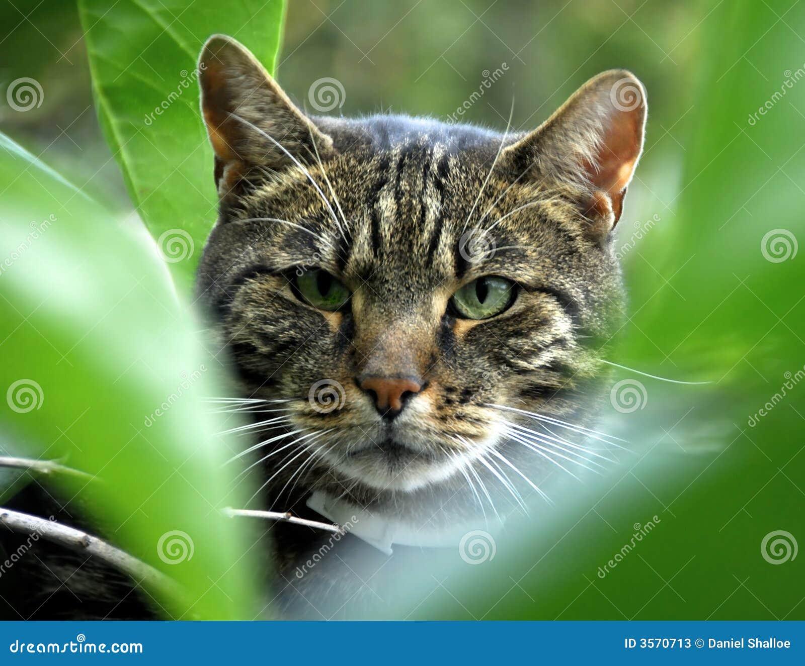 Gatto nella pianta