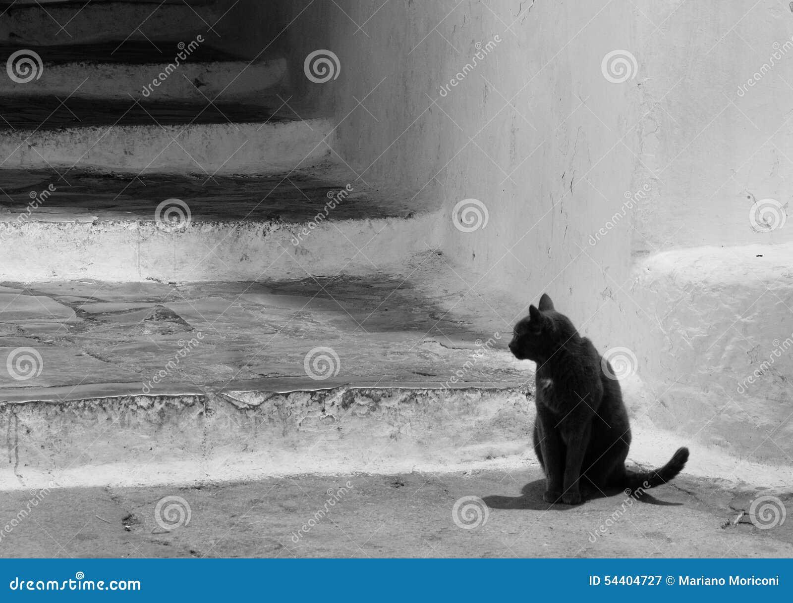 Gatto Nero Bianco E Nero Di Sperlonga Lazio Italia Immagine