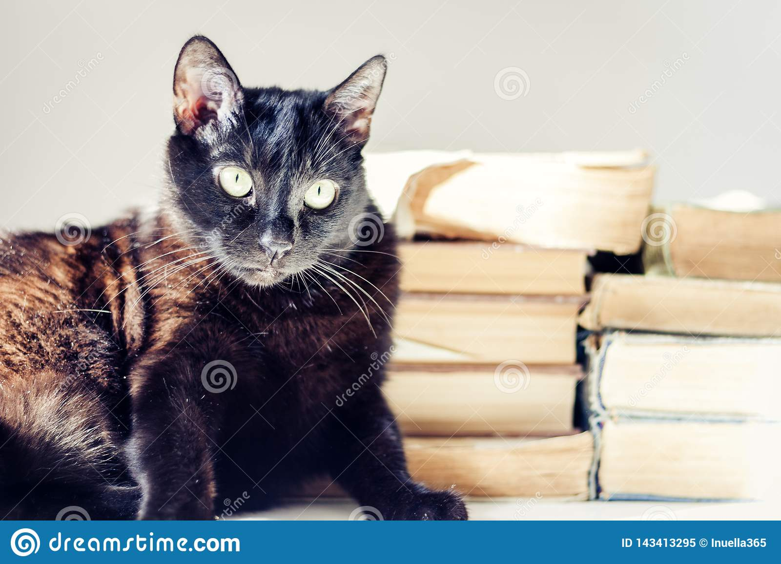 Gatto nero che si trova sulla tavola bianca, pila di vecchi libri su fondo