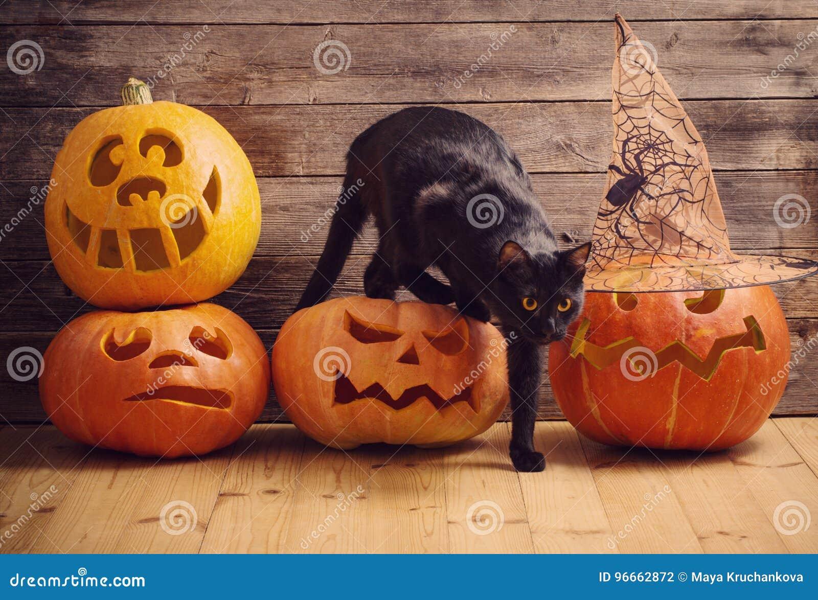 Zucca Halloween Gatto.Gatto Nero Con La Zucca Arancio Di Halloween Fotografia Stock