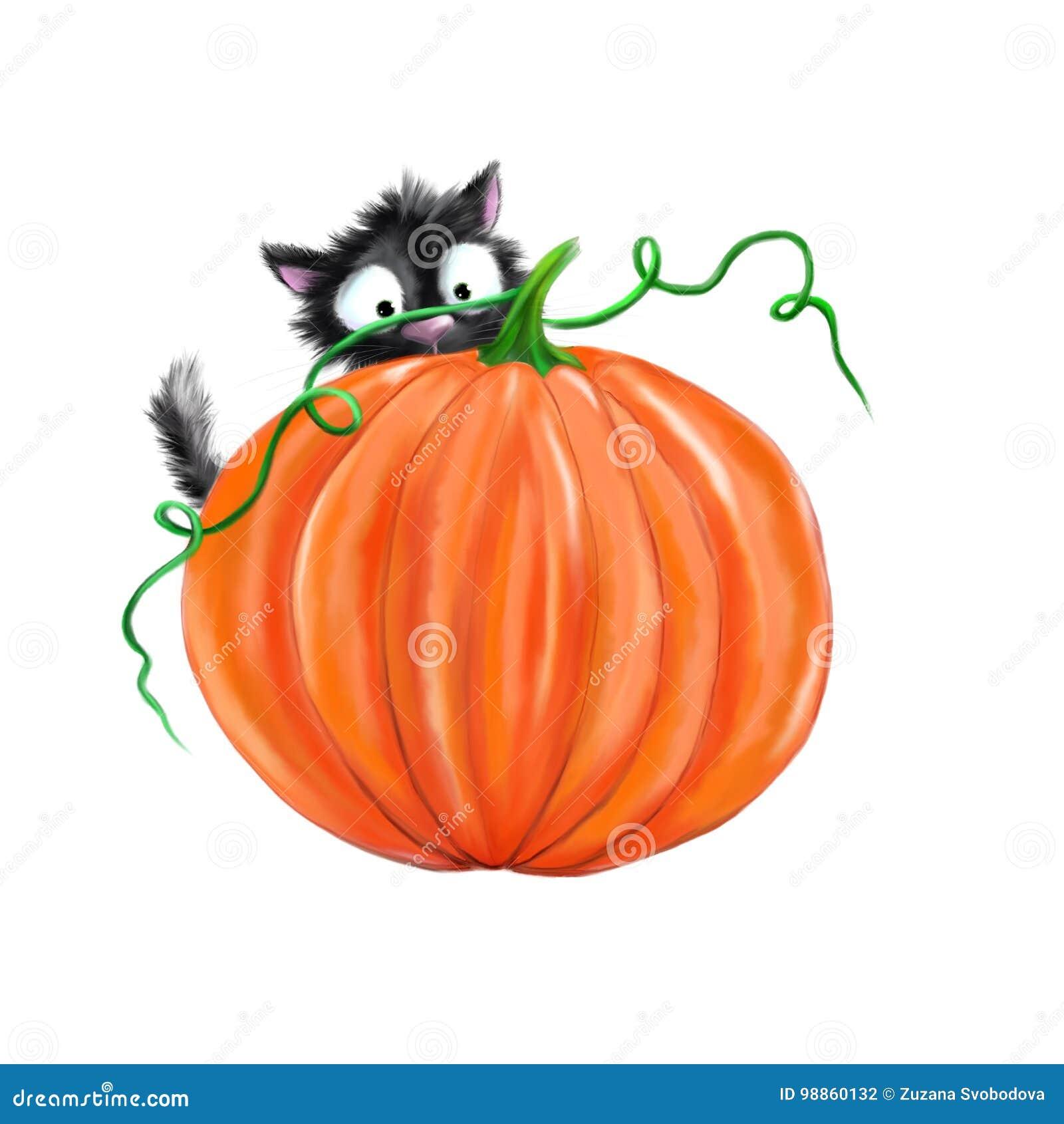Zucca Halloween Gatto.Gatto Nero Di Halloween Con La Zucca Illustrazione Di Stock