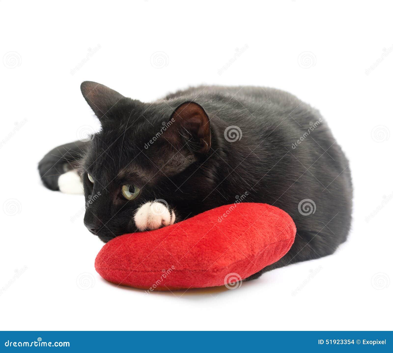 Gatto Nero E Cuore Rosso Fotografia Stock Immagine Di Divertente