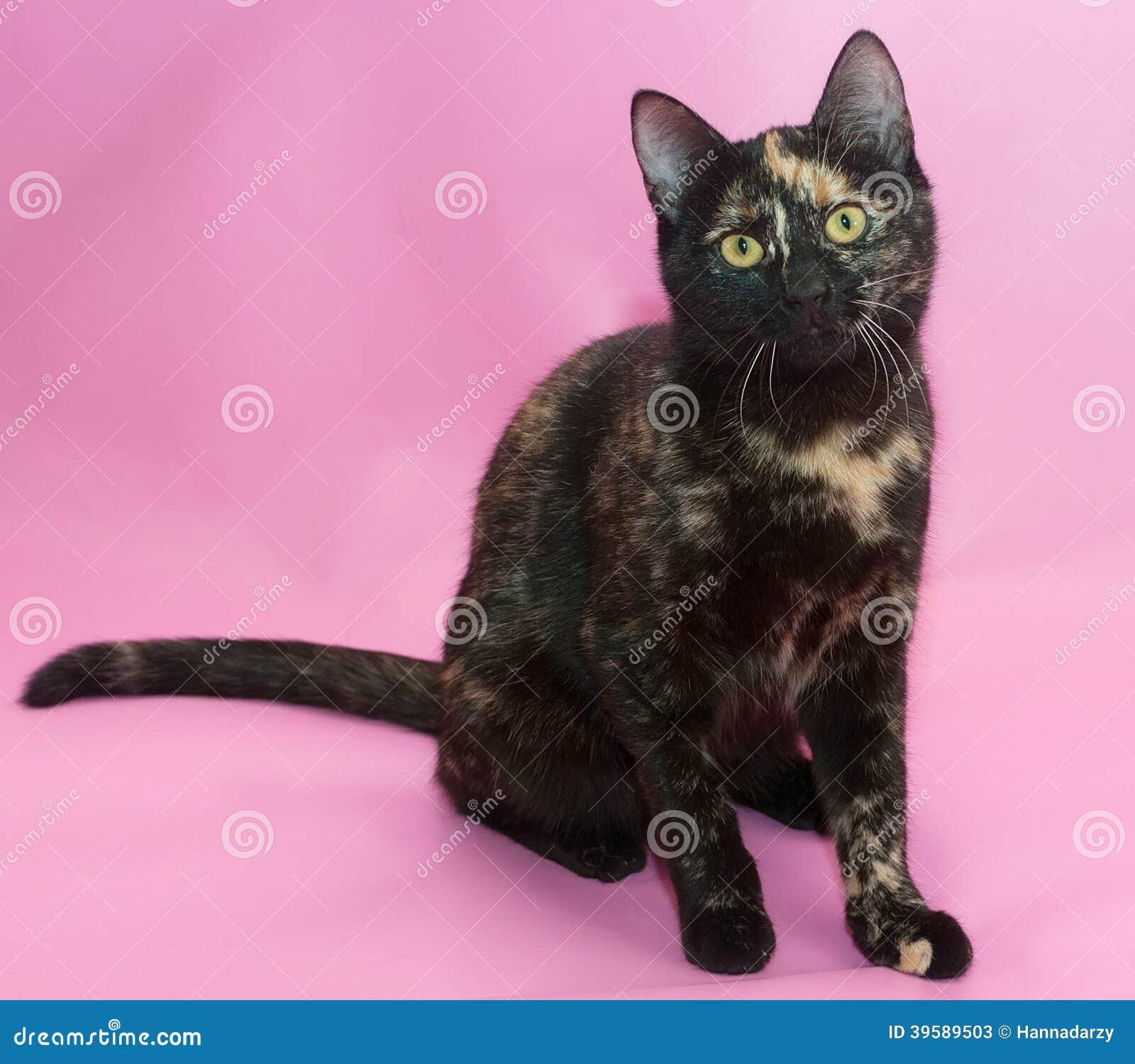 Gatto Nero E Rosso Che Si Siede Sul Rosa Immagine Stock Immagine