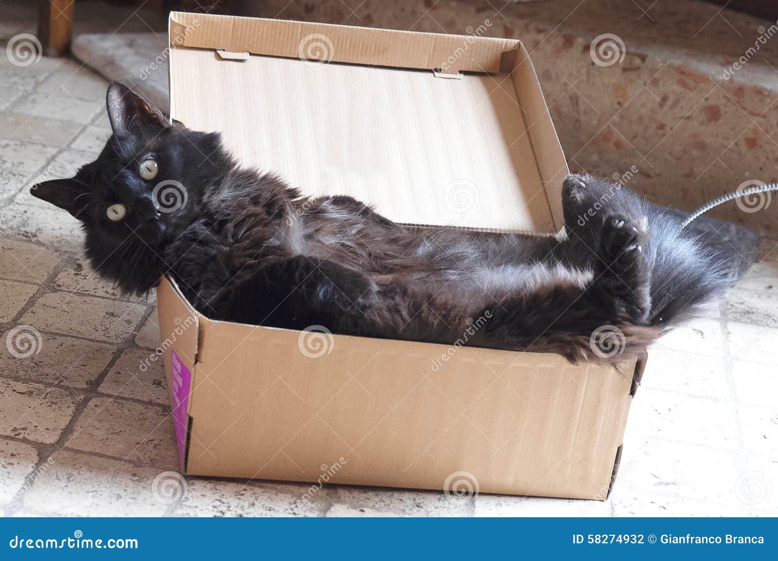 Gatto nero in una scatola