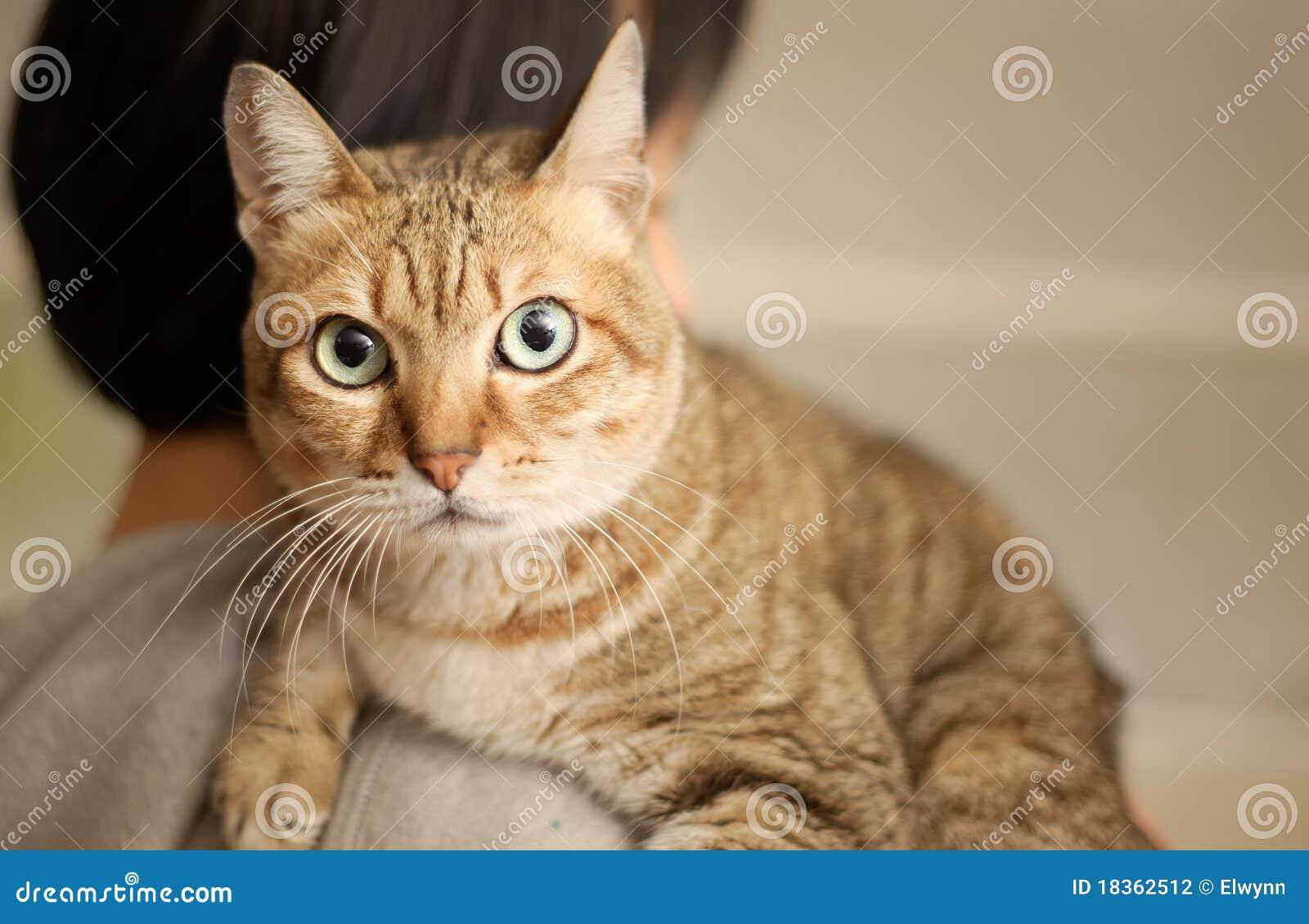 Gatto non colpevole