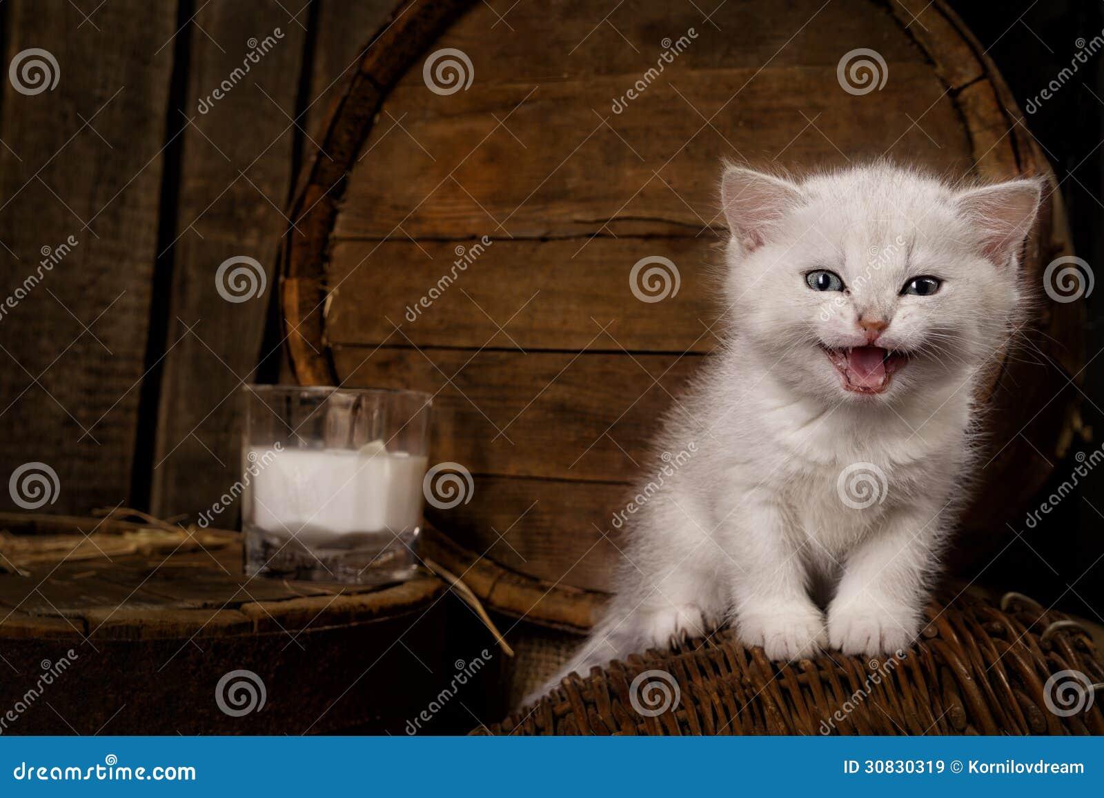 Gatto purulento con latte