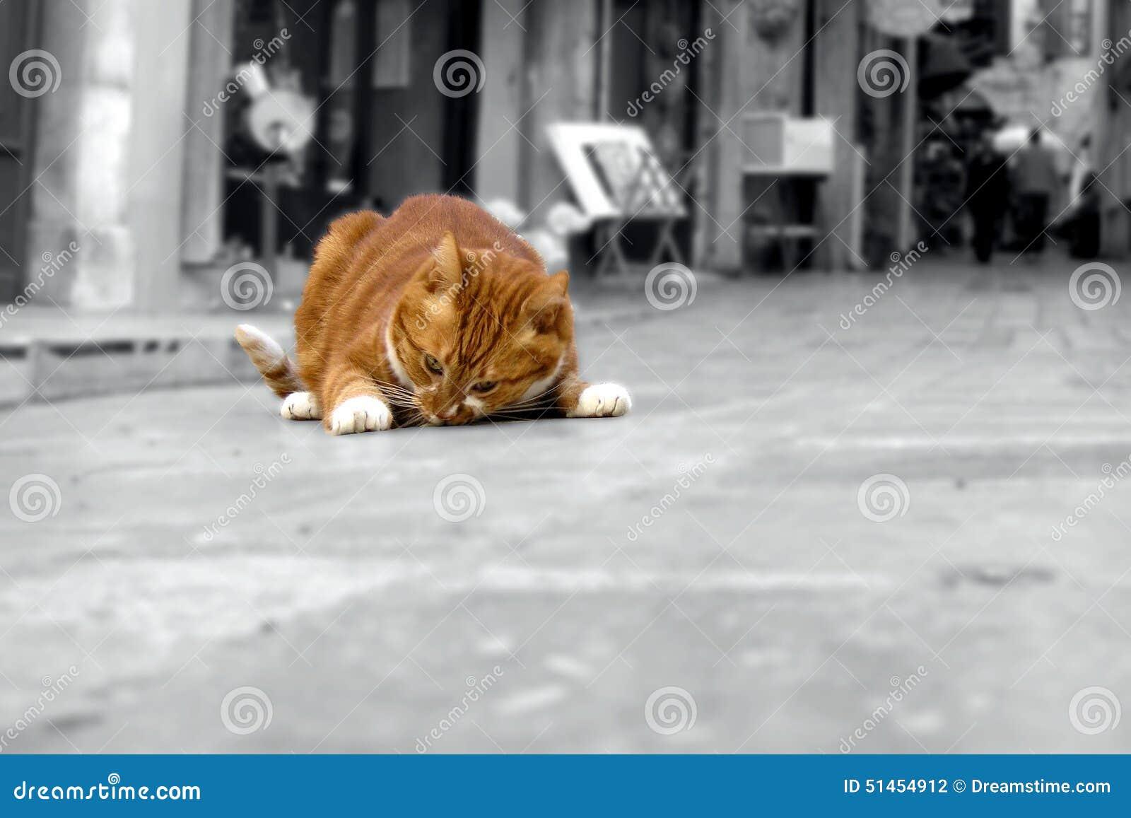 Gatto rosso grasso - Fette Katze a memoria