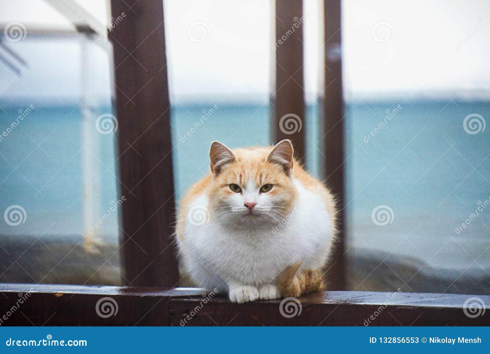 Gatto rosso senza tetto, i precedenti - la spiaggia