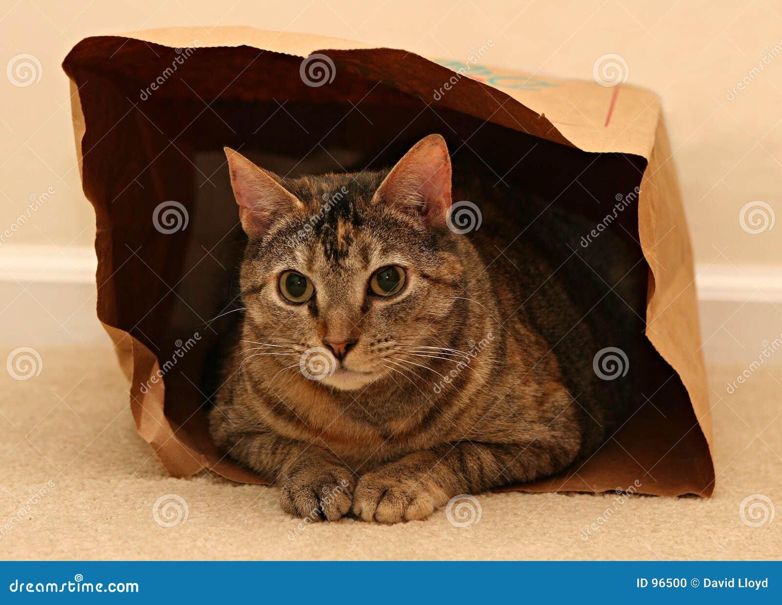 Gatto in sacchetto