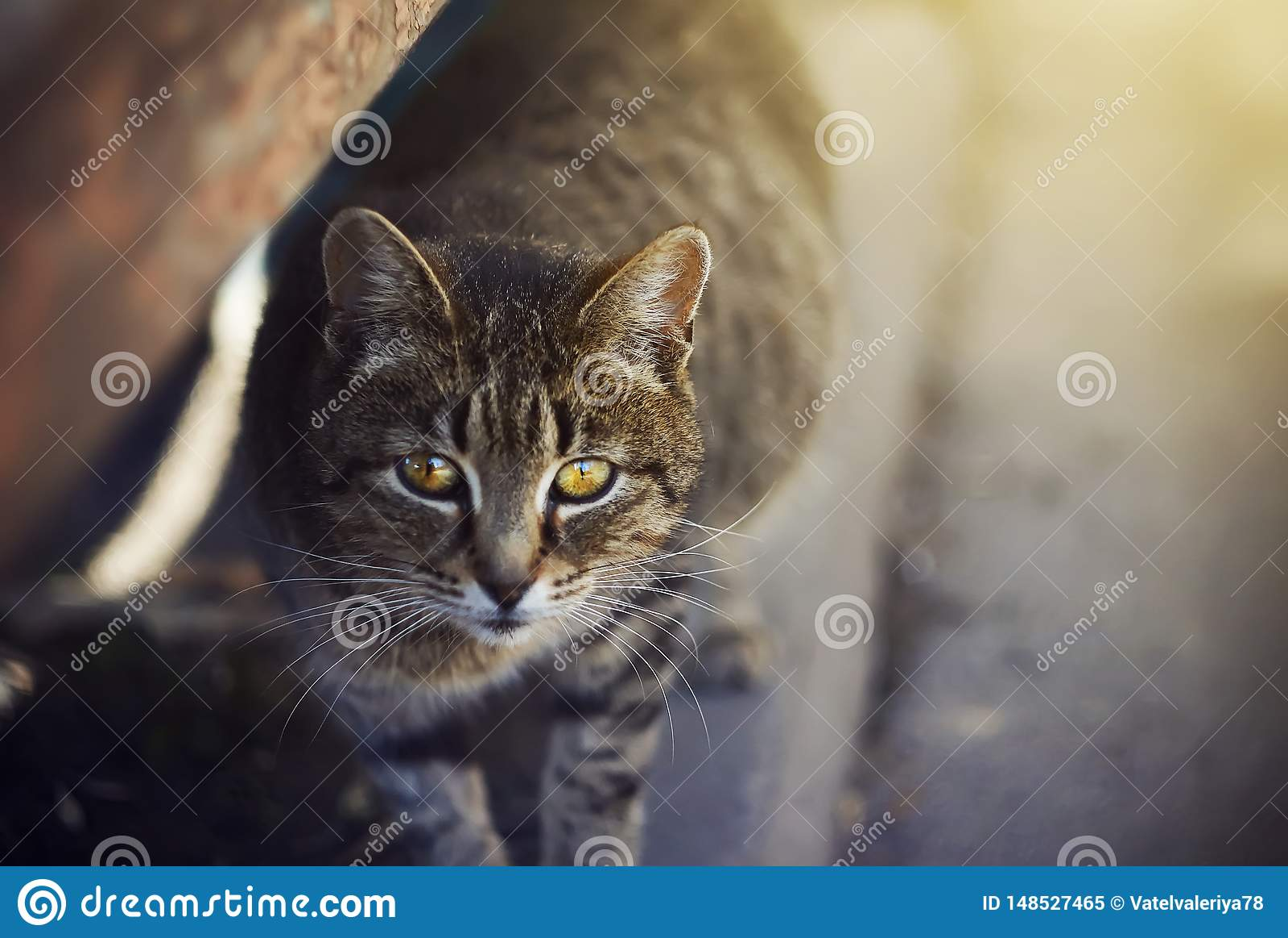 Gatto senza tetto sveglio con gli occhi gialli che stanno sulla pavimentazione