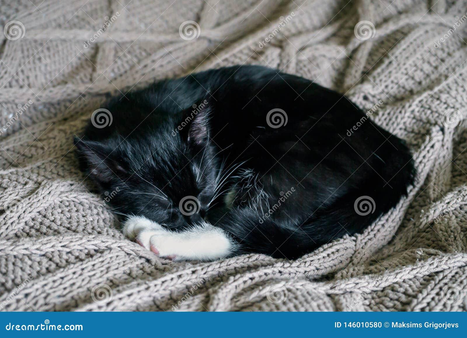 Gatto sonnolento in bianco e nero che riposa su un tiro del letto