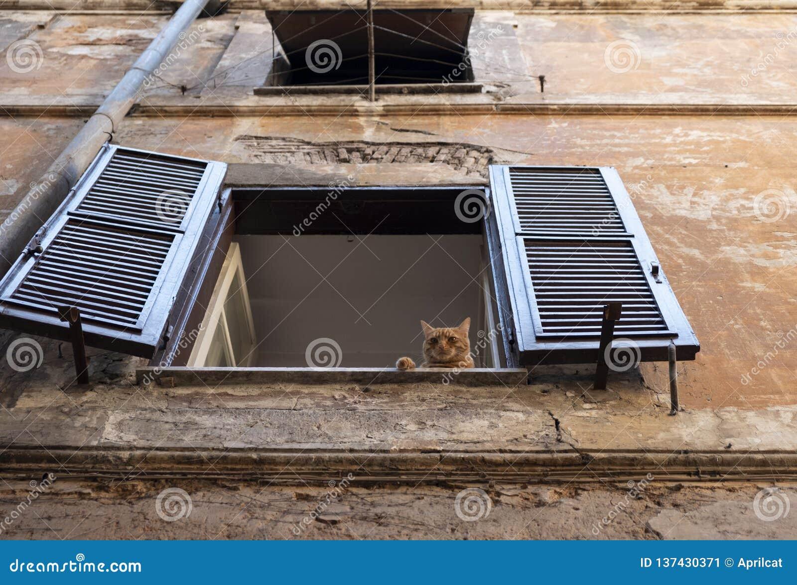 Gatto sonnolento dello zenzero che si trova su una finestra con gli otturatori di vecchia casa a Roma
