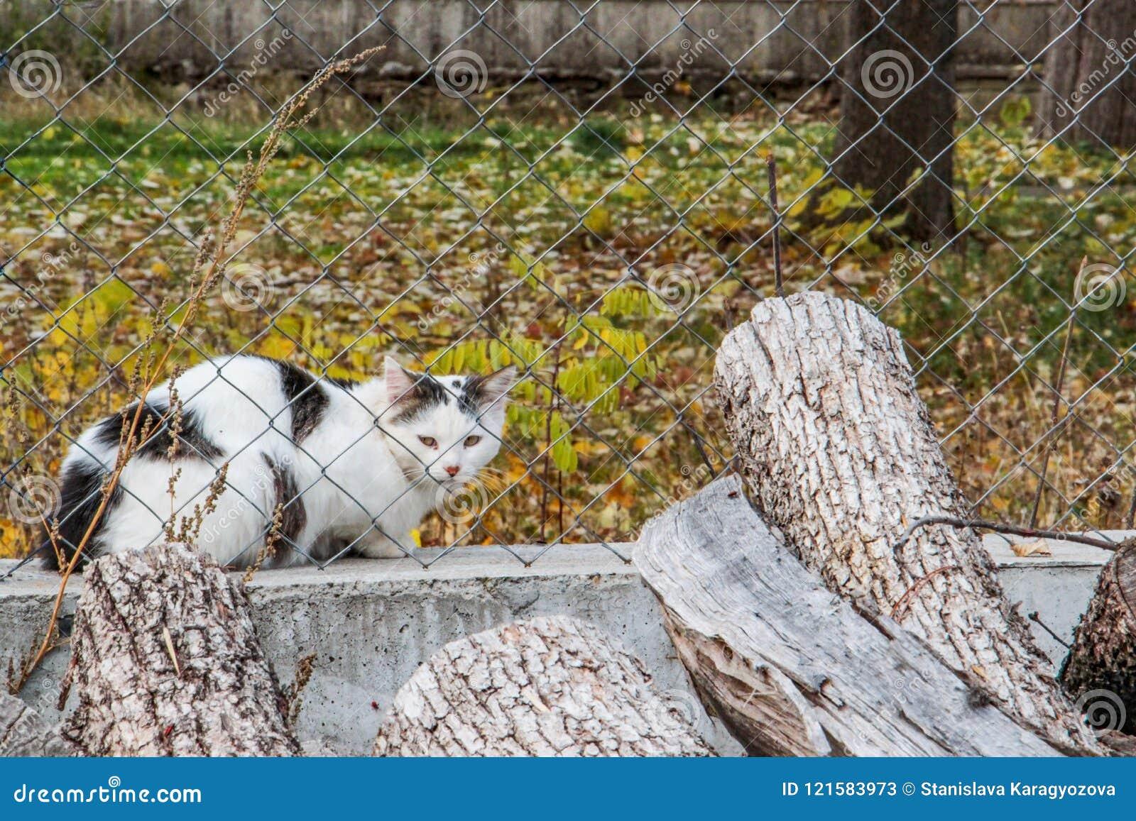 Gatto sospettoso dietro un recinto della rete metallica di un parco pubblico nel villaggio bulgaro di Debnevo