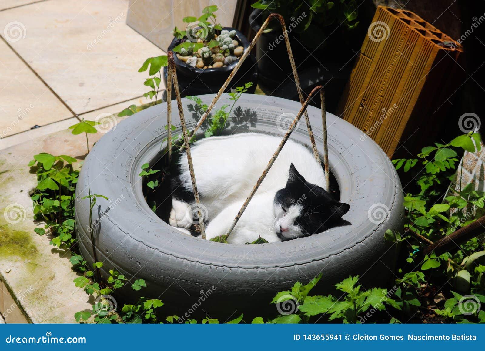 Gatto splendido nel sonno della gomma