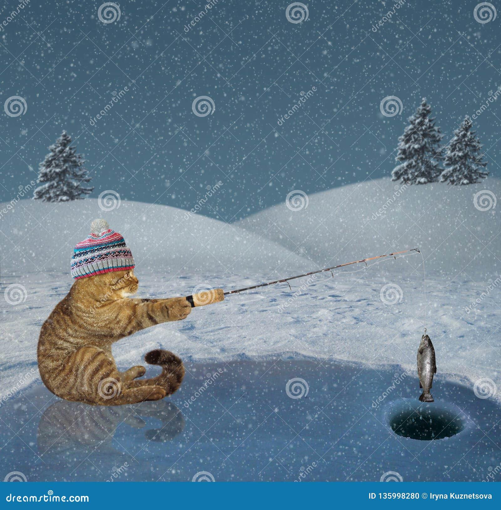 Gatto su pesca di inverno