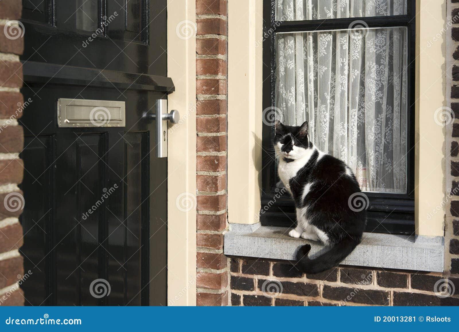 Gatto sul davanzale della finestra immagine stock immagine 20013281 - Davanzale finestra interno ...