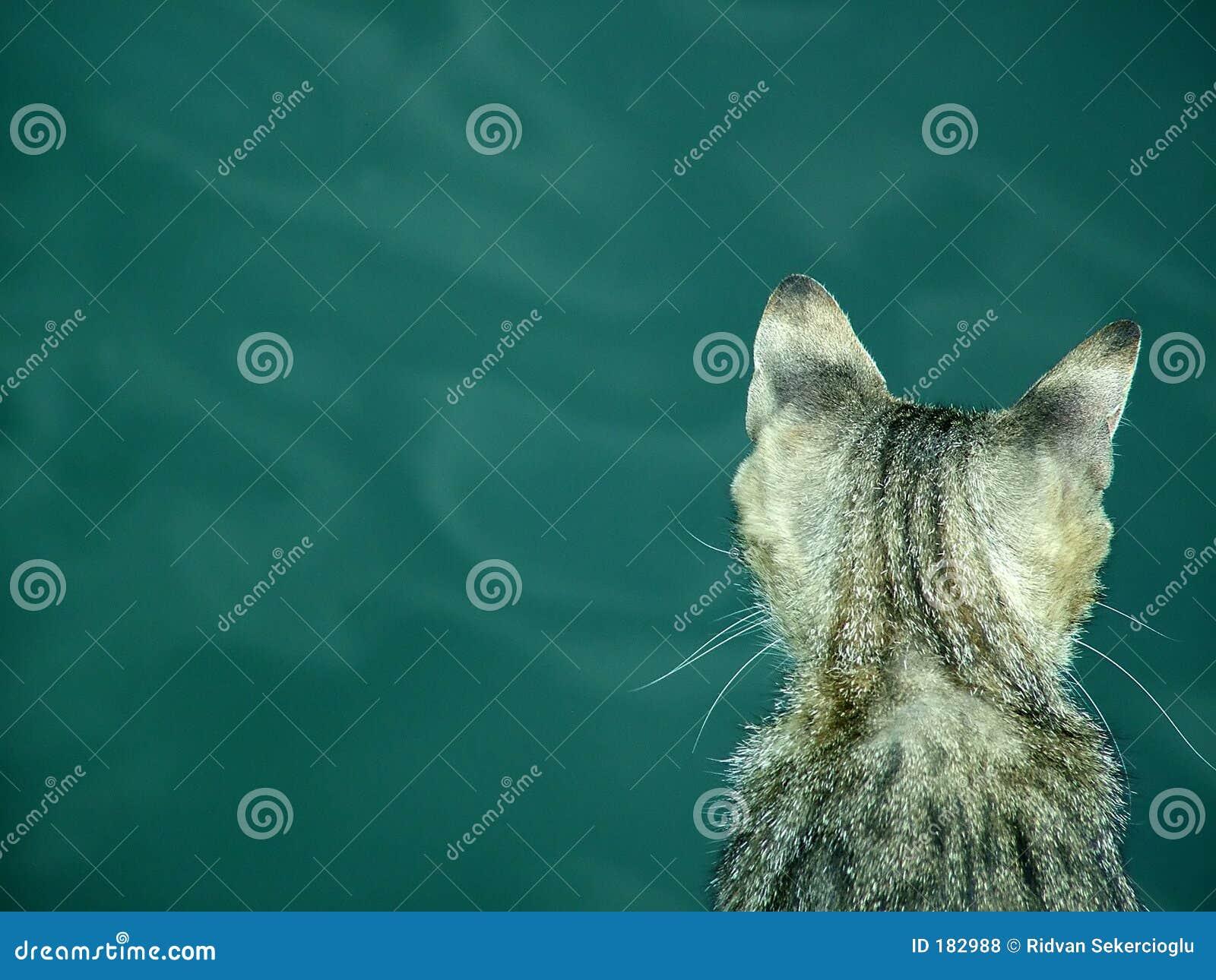 Gatto sul mare