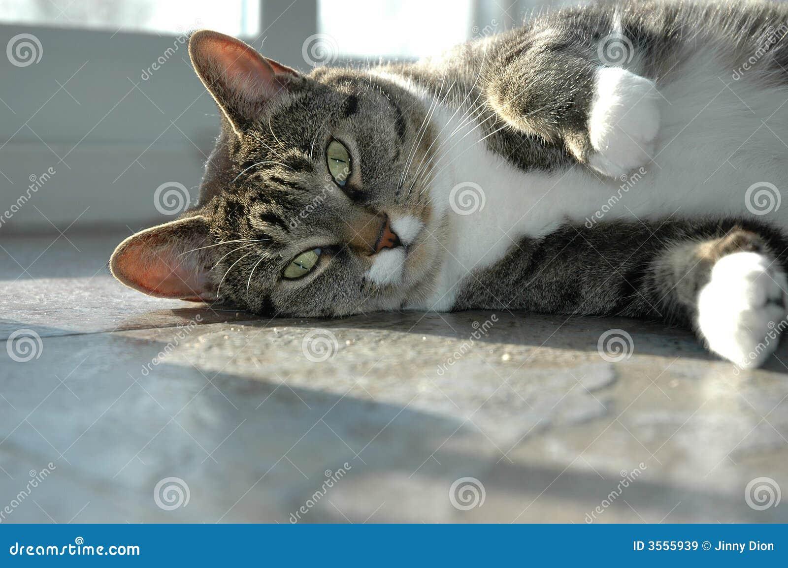 Gatto sul pavimento