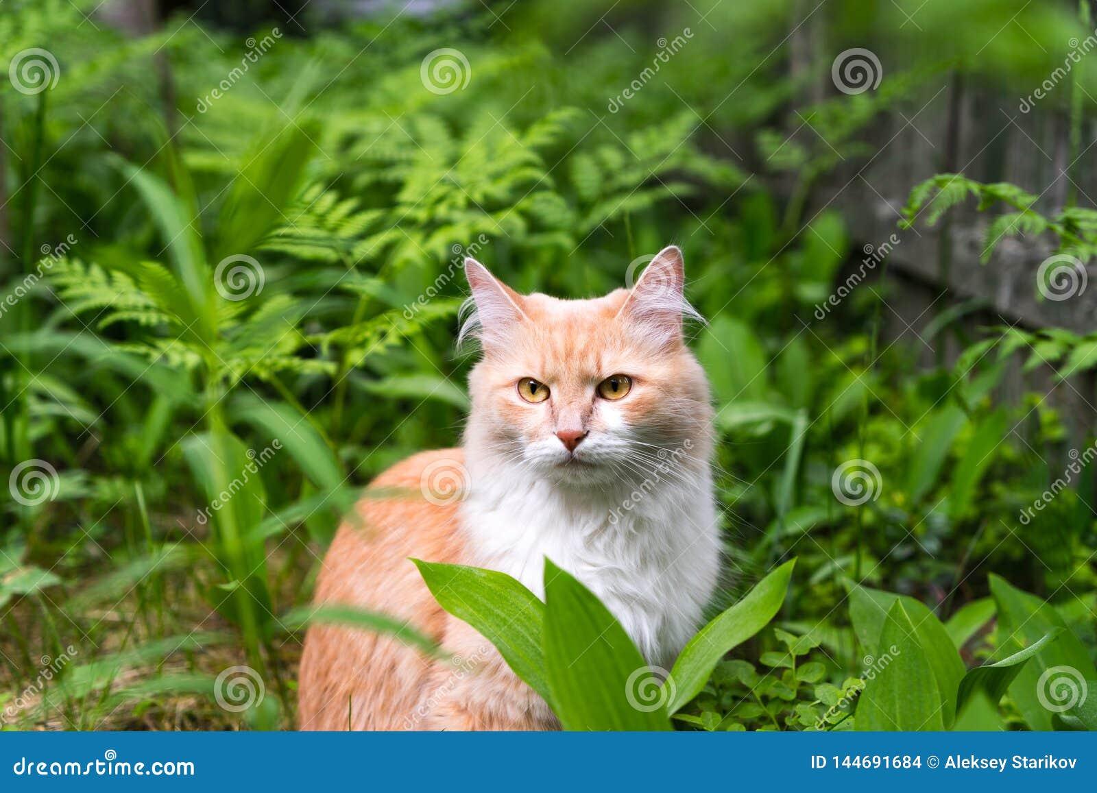 Gatto sull erba, gatto nella foresta