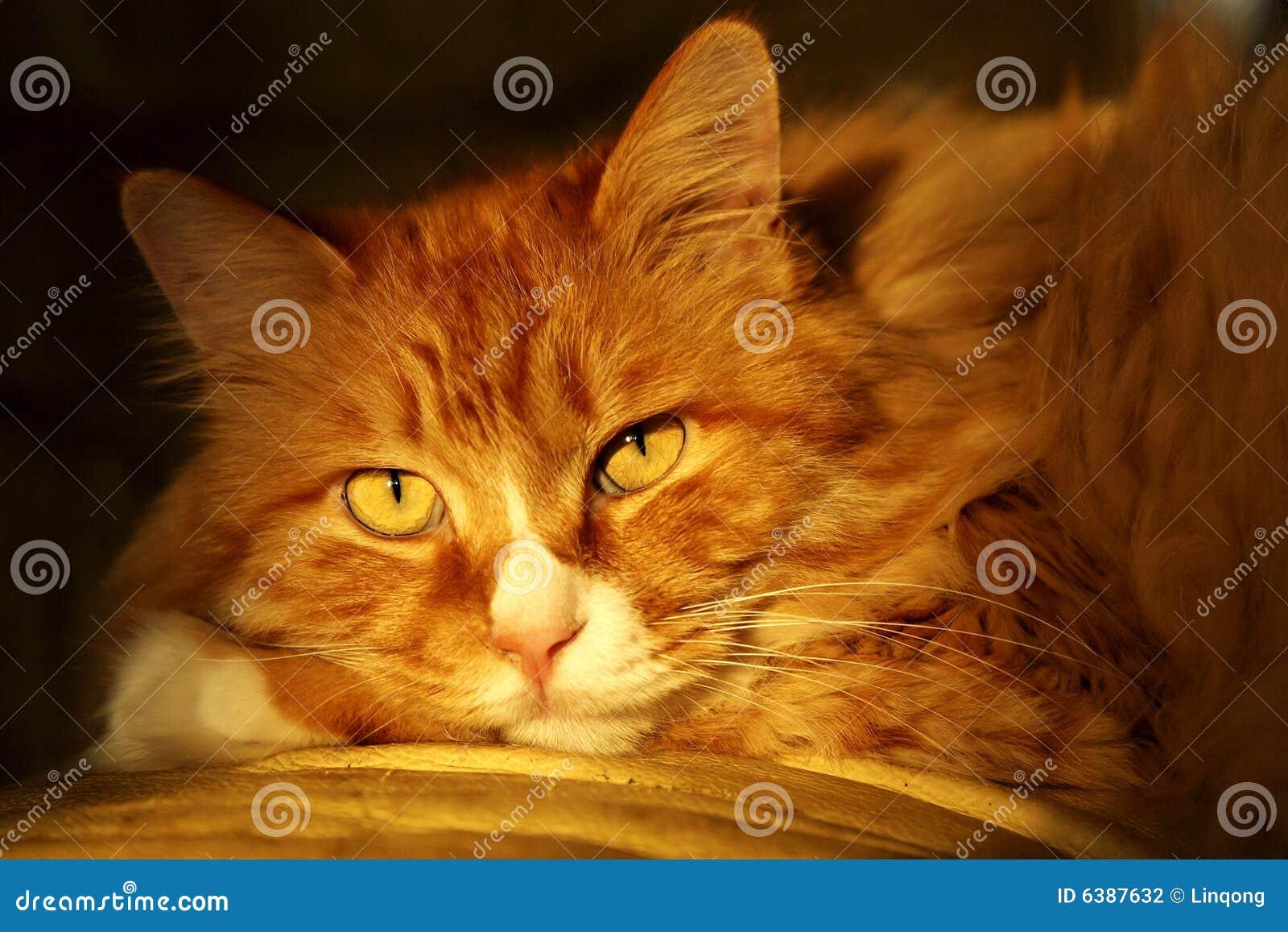 Gatto sveglio nel crepuscolo