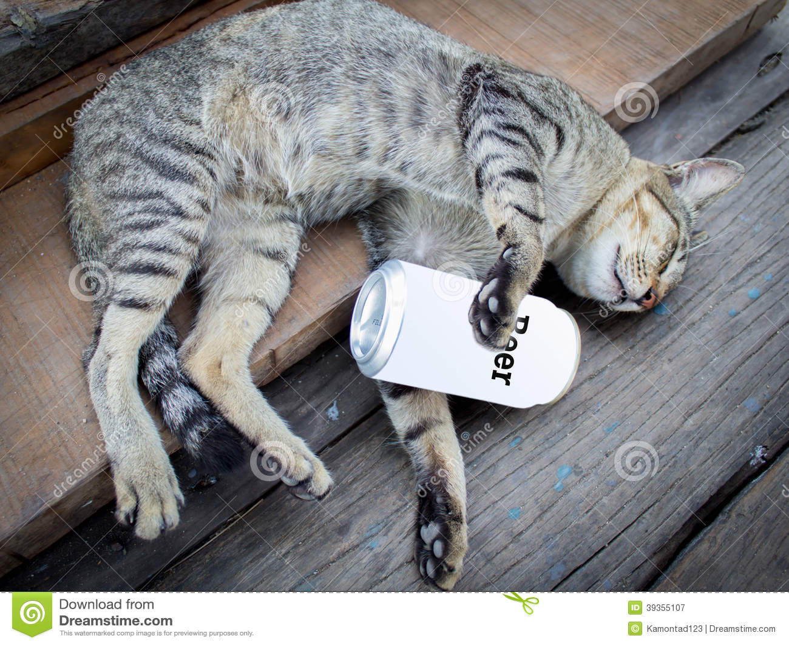 Gatto Ubriaco Immagine Stock Immagine Di Cute Menzogne 39355107