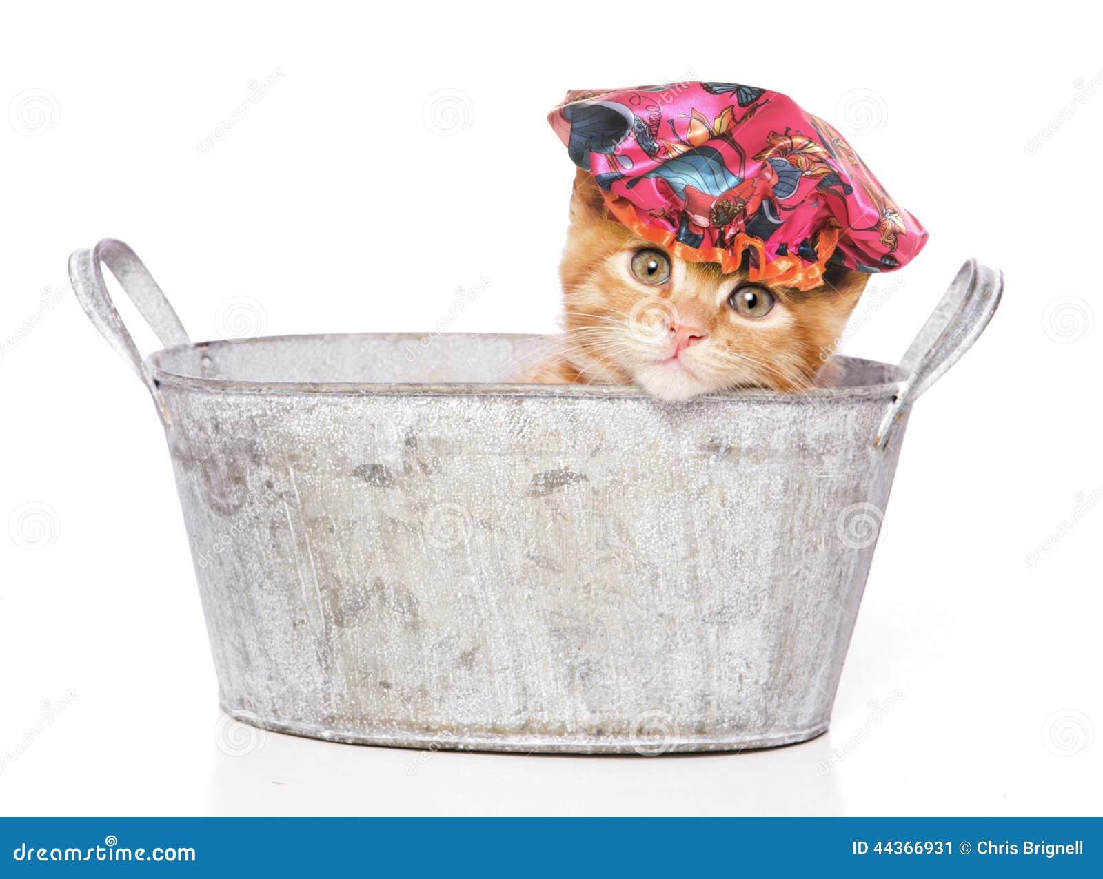 Gatto in un bagno con la cuffia da doccia
