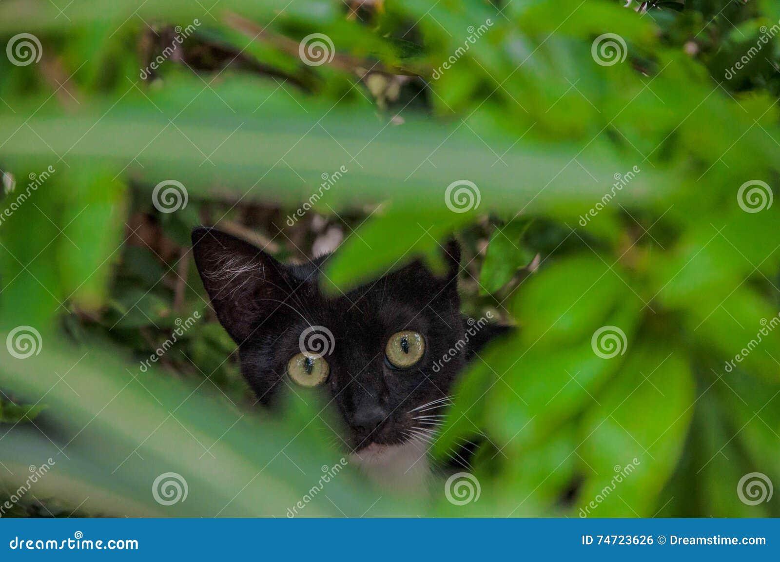 Gatto in un cespuglio