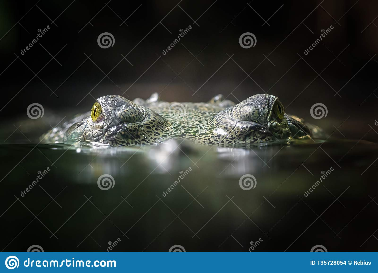 Gavial indio