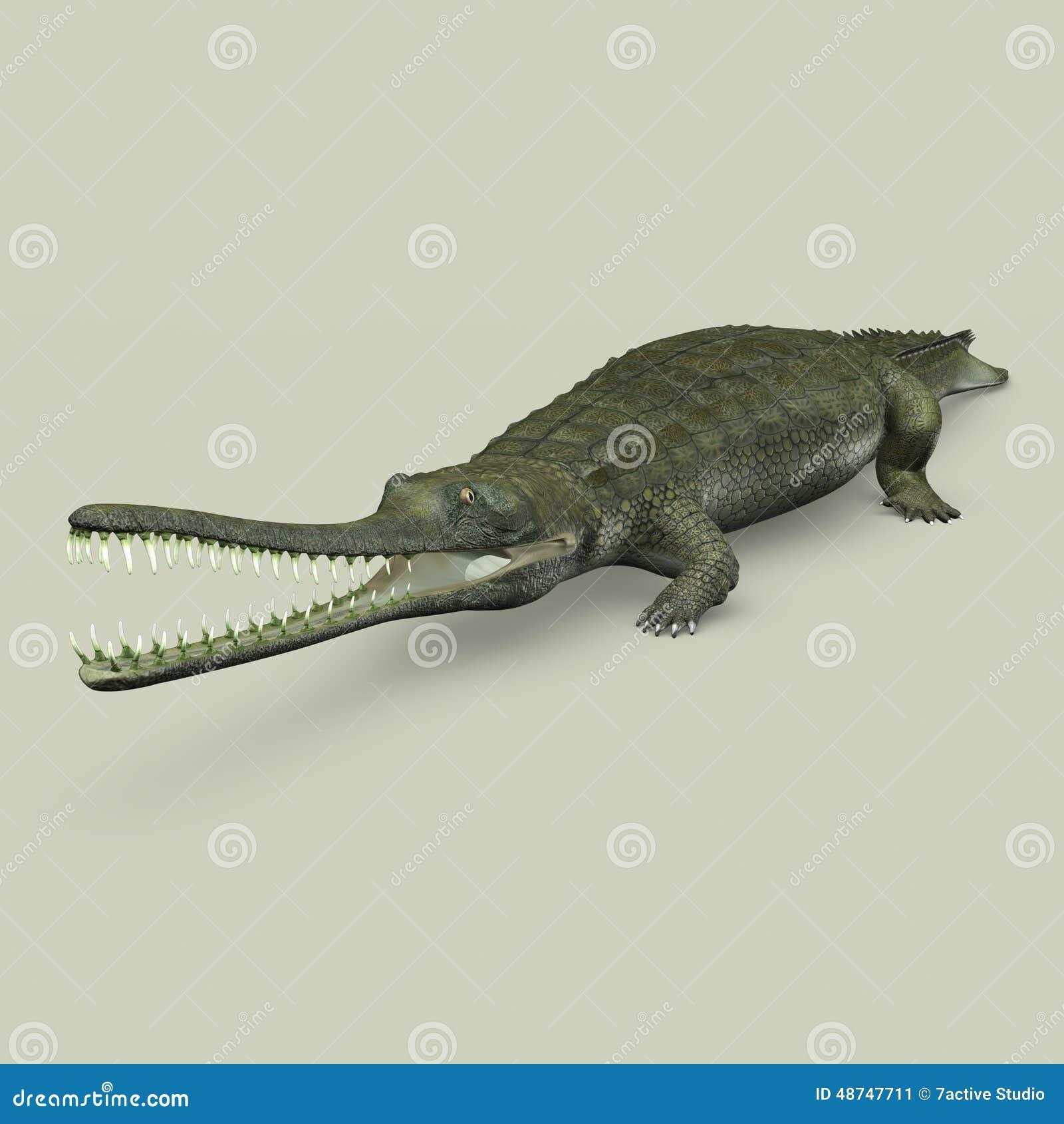 Gavialis Gangeticus (Crocodile) Stock Illustration - Illustration of ...