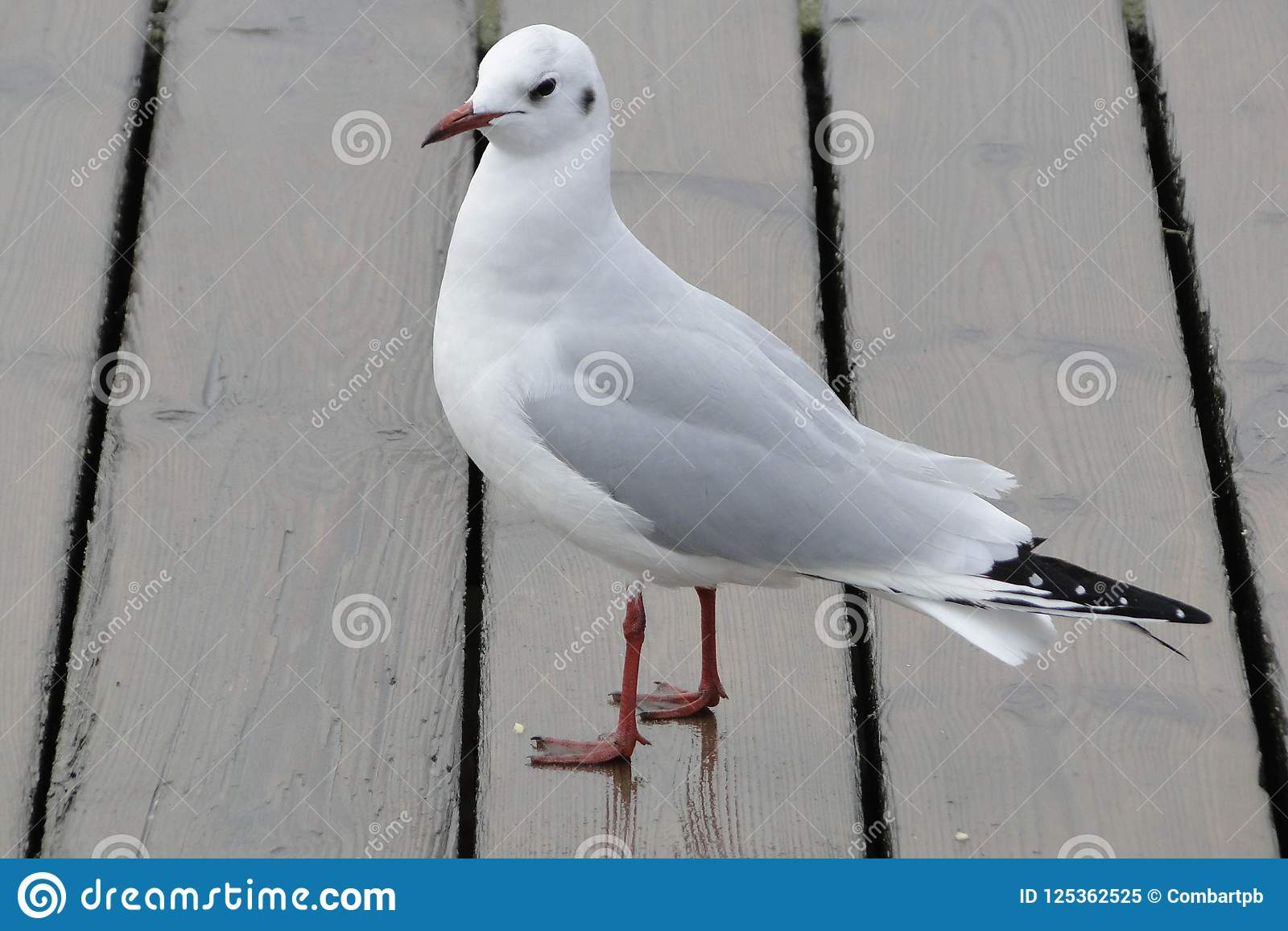 Gaviota blanca y gris en la playa