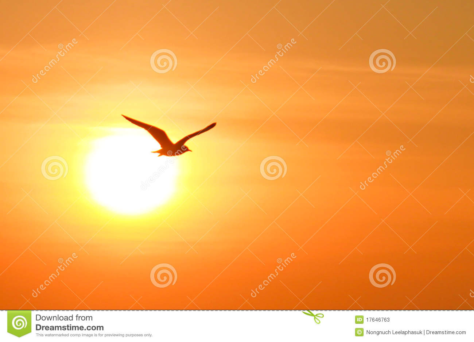 Gaviota en fondo de la puesta del sol fotos de archivo for Fondo del sol