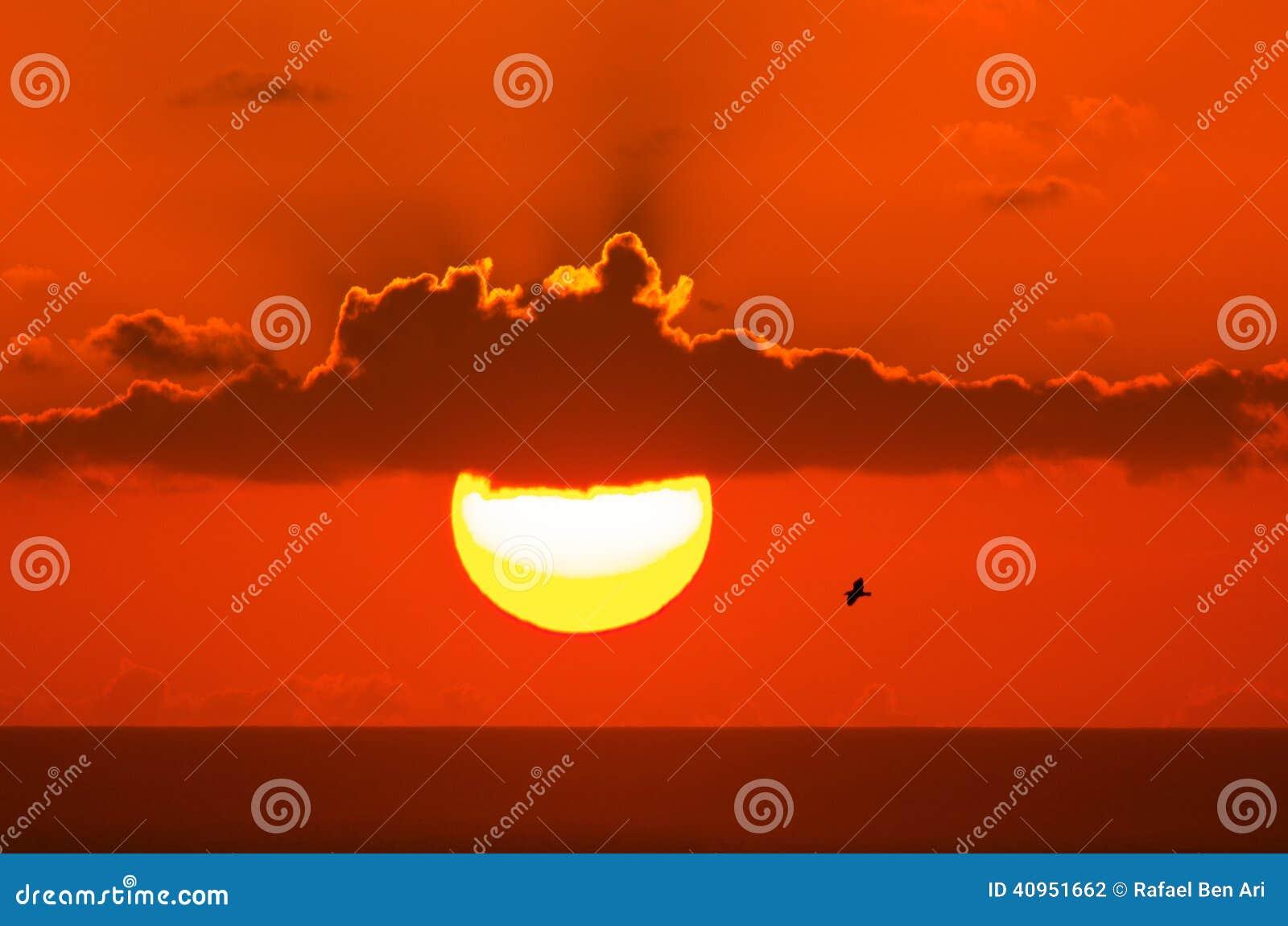 Gaviota en fondo de la puesta del sol foto de archivo for Fondo del sol