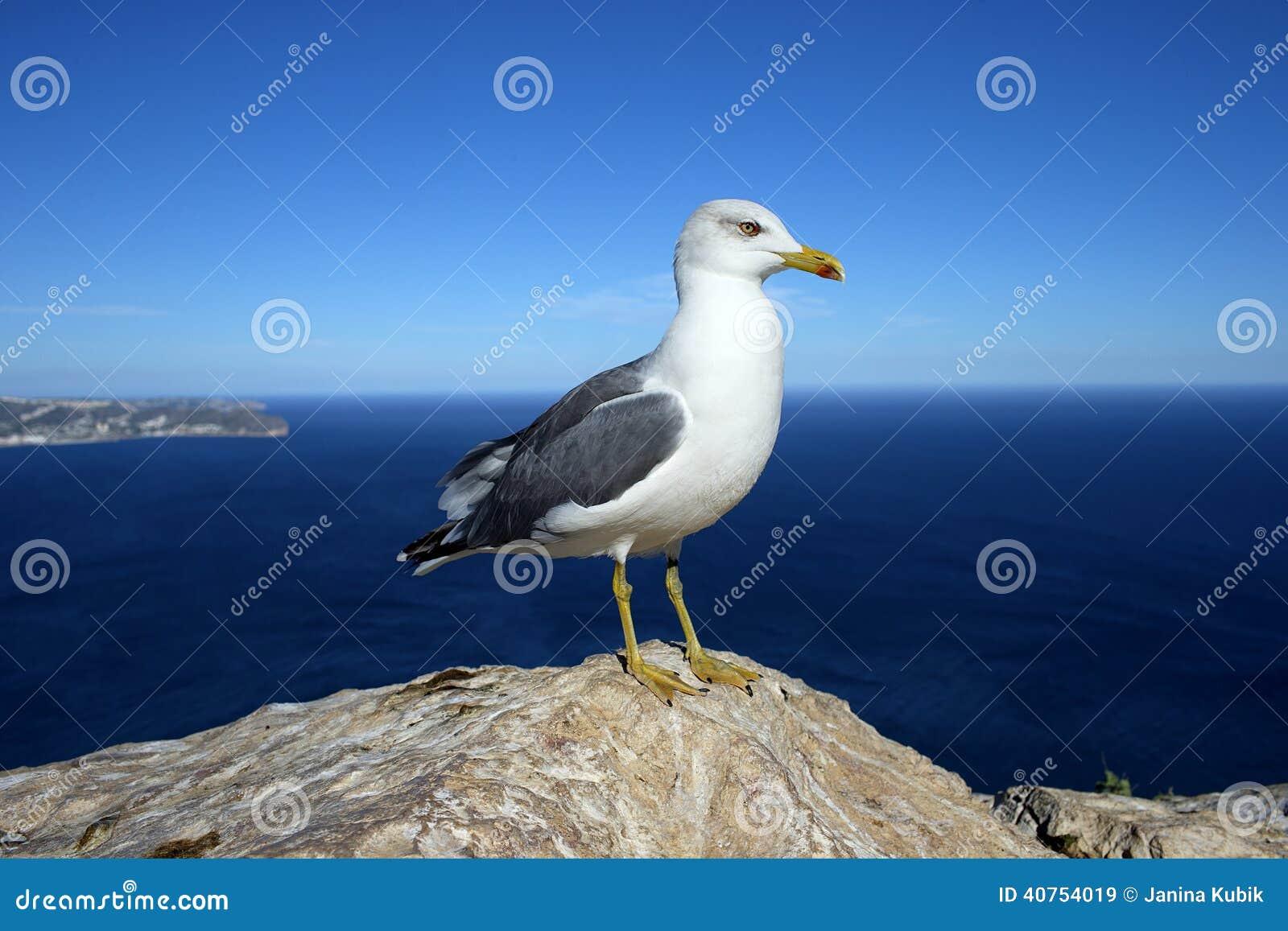 Gaviota en una roca por el mar