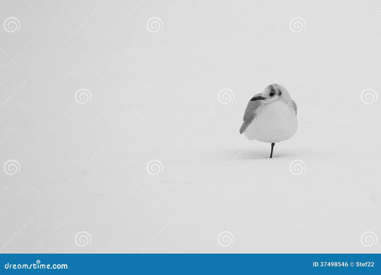 Gaviota sola en invierno
