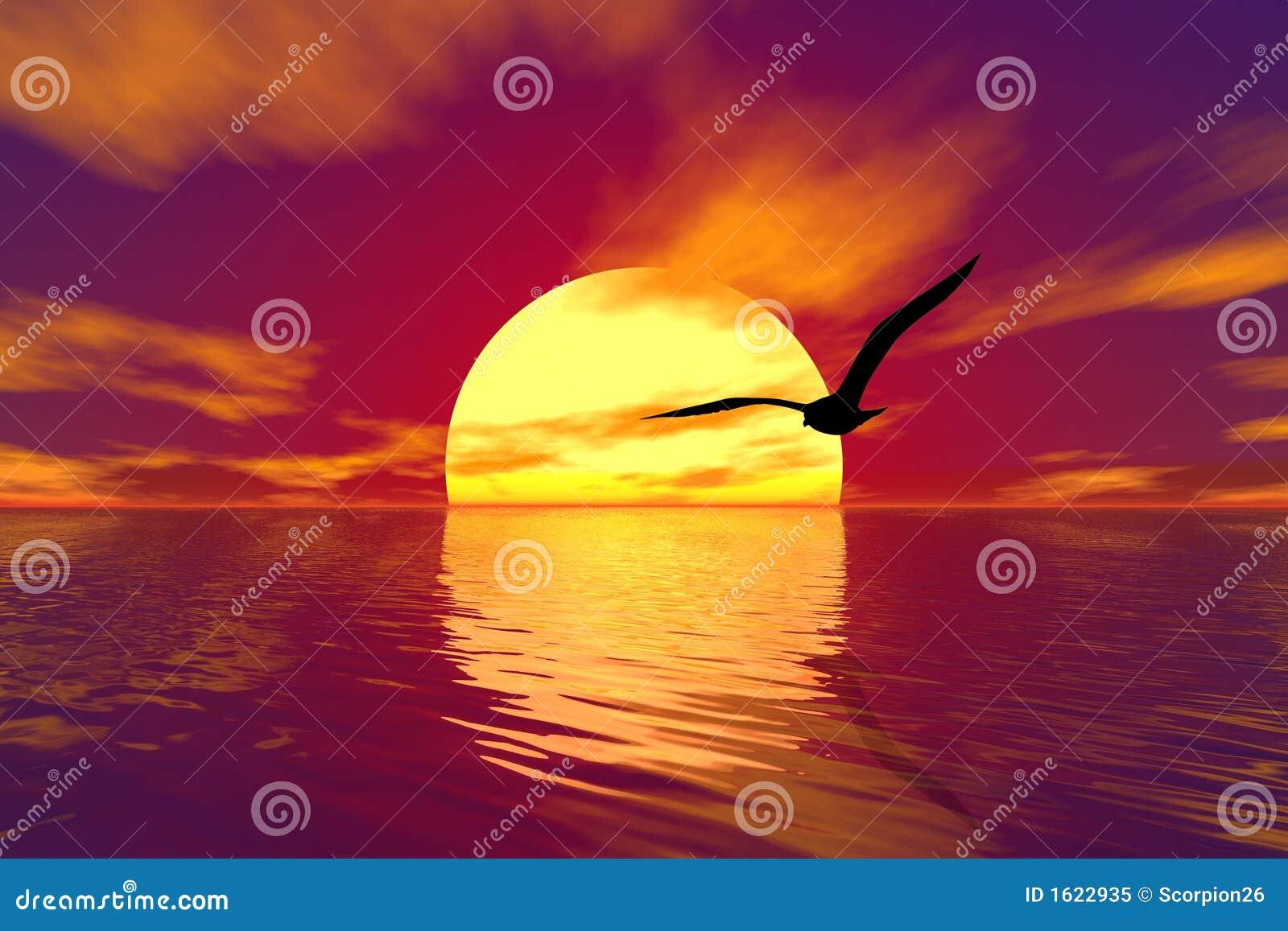 Gaviota y puesta del sol
